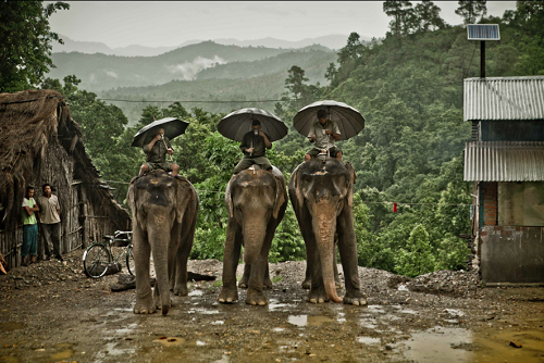 relationship between elephant and mahout